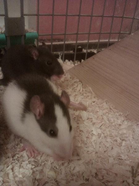 Miu und Ivy erstes Mahl