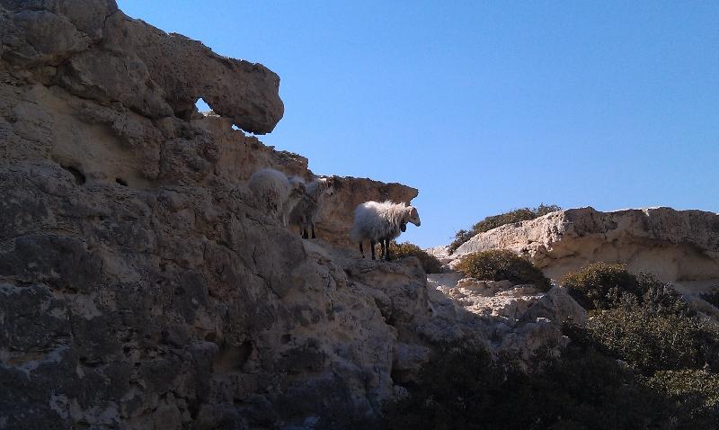 Schafe auf dem Berg