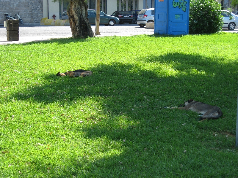 Hunde in Heraklion